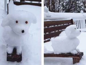 Snow Dog by Katie Kim, a senior at Horace Greeley High School