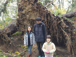 Standing next to the exposed roots of an uprooted tree, the Paskowitz children (Anna, Lyle and Kate) show, by comparison, the size of the loss of many mature trees, this one on Marcourt Drive.