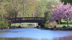 Wampus Brook Park in Spring