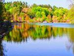 Gedney Park Pond  Photo by Marianne Campolongo