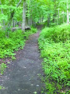 A well-trodden trail at the Betsy Sluder Preserve beckons to be walked.