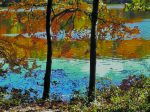 Monet-like Foliage. Cross River Reservoir, Pound Ridge.