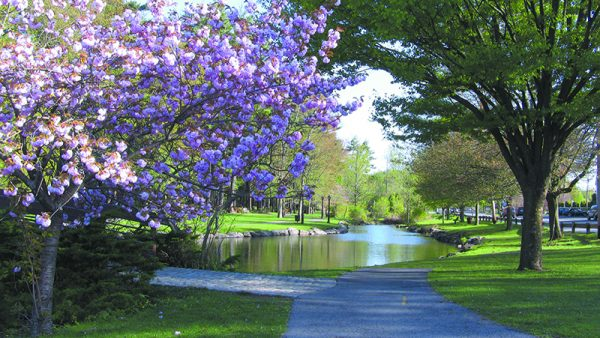 Wampus Brook Park is the perfect location for a picnic this spring.