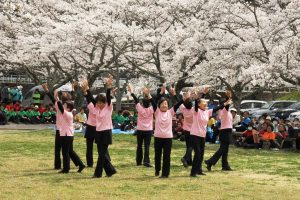 People of Shinshiro City, Japan, at Cherry Blossom time