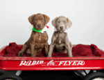 The SPCA: Helping Furry Friends Find Forever Homes