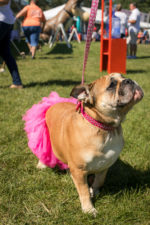 Puttin' on the Dog Festival  by Adopt-a-Dog Brings Out Dog Lovers in Droves