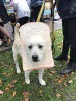 First Ever Halloween Doggie Costume Contest a Hit at the Chappaqua Farmers Market